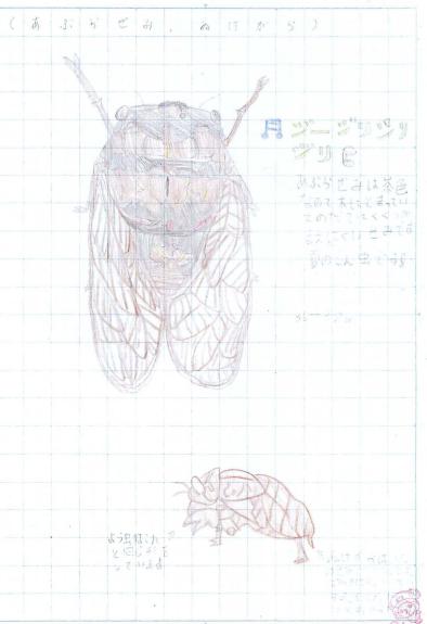 夏の代表昆虫